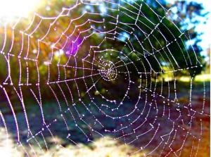 dewdropsonweb